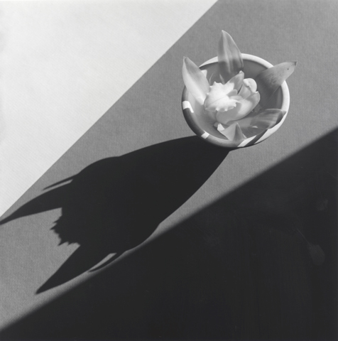 &lt;i&gt;Orchid&lt;/i&gt;, 1987