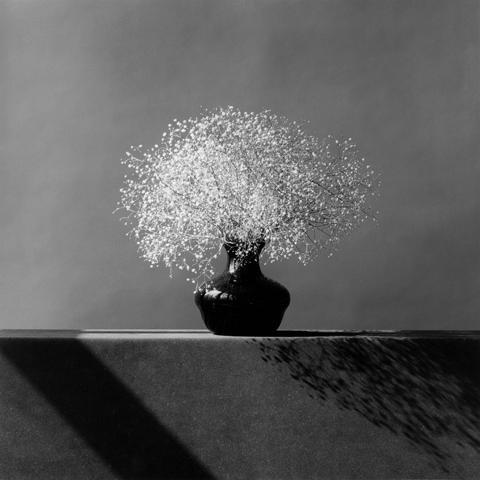 &lt;i&gt;Baby&#039;s Breath&lt;/i&gt;, 1982