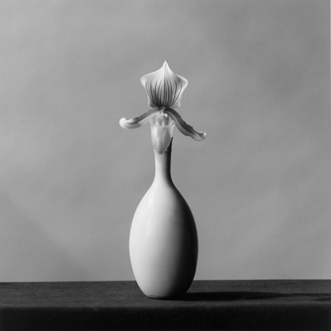 &lt;i&gt;Orchid&lt;/i&gt;, 1982