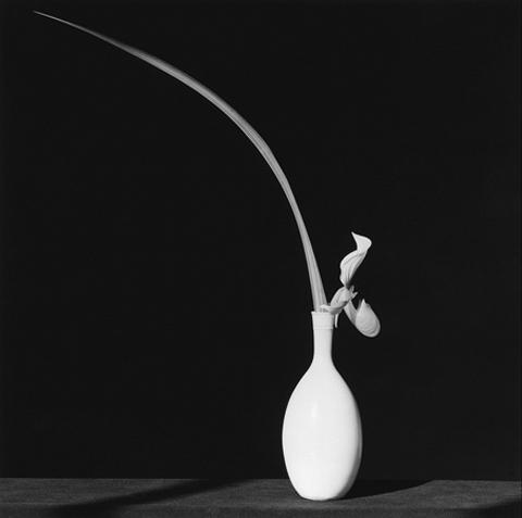 <i>Orchid</i>, 1982