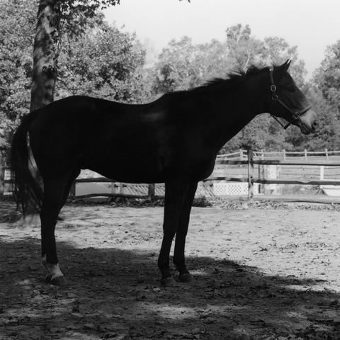 Horse #4, 1982