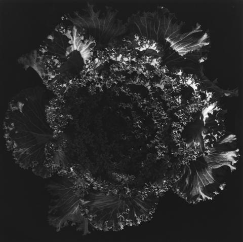 &lt;i&gt;Kale&lt;/i&gt;, 1978