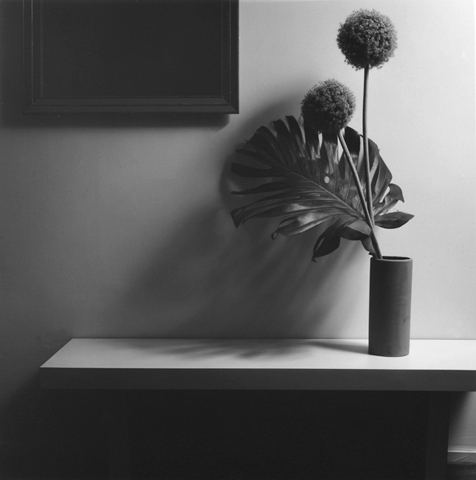 &lt;i&gt;Flower&lt;/i&gt;, 1980