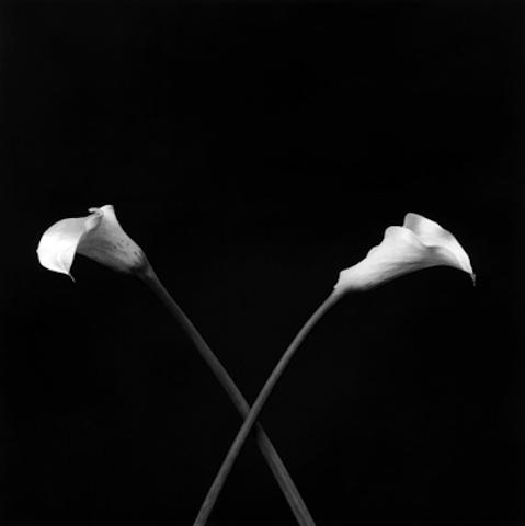 <i>Calla Lilies<i>, 1983