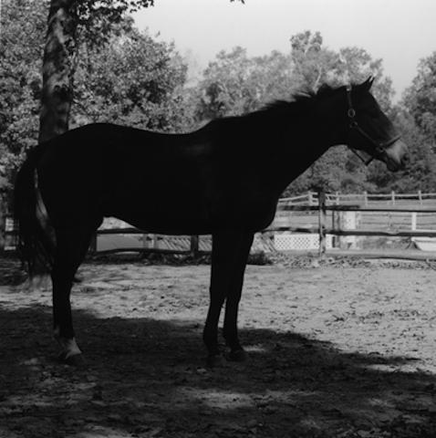 <i>Horse #4<i>, 1982