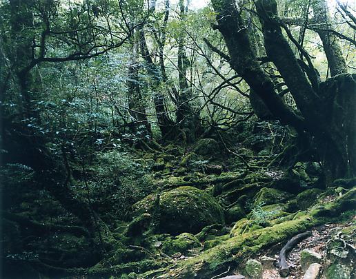 <b>Paradise 13, Yakushima, Japan</b>, 1999 Image
