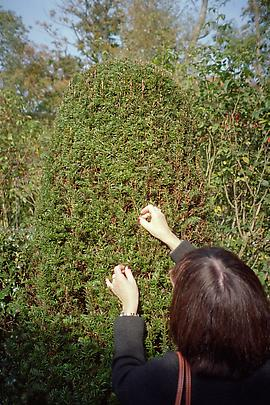 <b>Jeanette in Wirtz' Garden</b>, 2009 Image