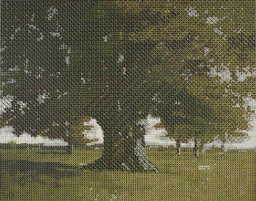 Courbet's Oak Tree, 2011 Image