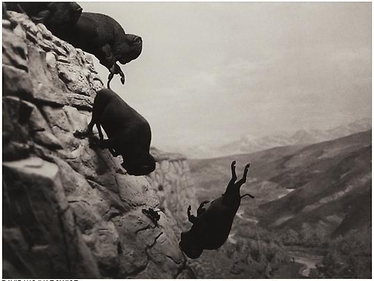 David Wojnarowicz Untitled (Buffalos), 1988-89 Image