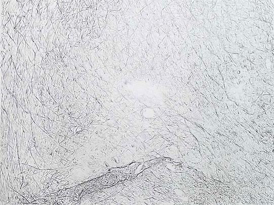 GIUSEPPE PENONE <i>Pelle di Grafite - Trasparenza (Graphite on Skin -Transparency)</i>, 2005 Image