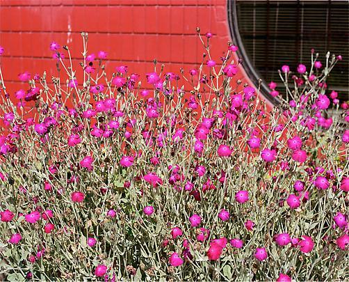 JEFF WALL <i>Flowering Plant</i>, 2012 Image