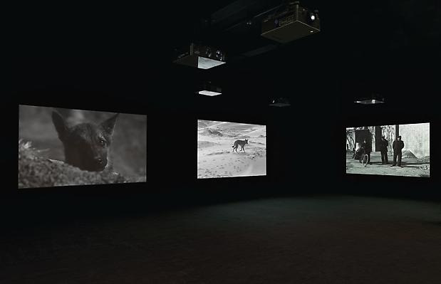 Installation View  <b>East of Que Village (Dog)</b>, 2007 Image