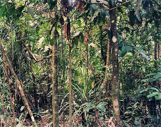 <b>Paradise 4, Daintree, Australia</b>, 1998 Image