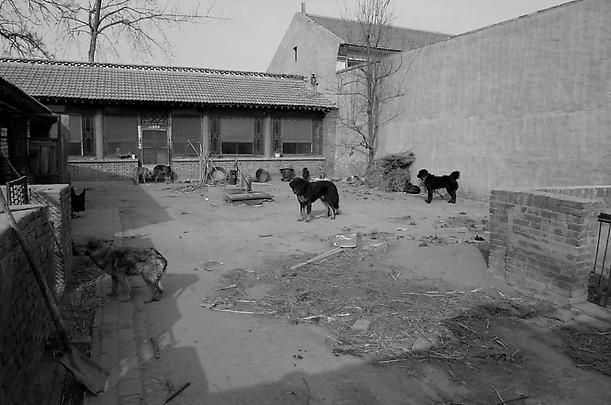 <b>East of Que Village (Dog)</b>, 2007 Image