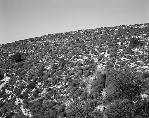 <b>Hillside in Sicily</b>, 2008 Image