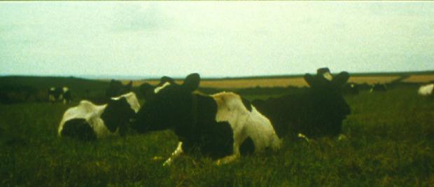 <b>Banewl</b>, 1999 Image