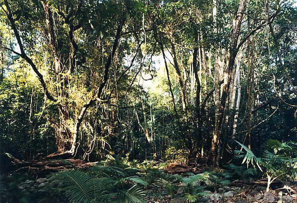 <b>Paradise 3 (Emmagen Creek) Daintree, Australia</b>, 1998 Image