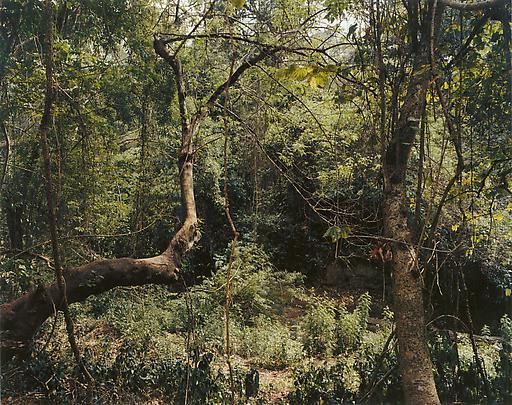 <b>Paradise 12 (Xi Shuang Banna) Provinz Yunnan, China</b>, 1999 Image