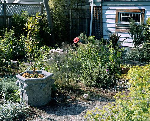<b>Poppies in a garden</b>, 2006 Image