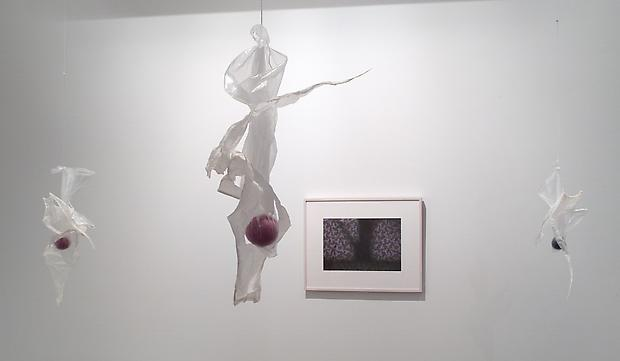 Installation view North Viewing Room:   <b>Mixiote</b>, 2001  On the wall: <b>Tree Through Leaves</b>, 2001 Image