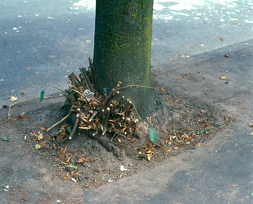 <b>Clipped Branches, East Cordova St., Vancouver</b>, 1999 Image