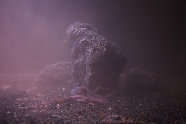 <b>Aquarium Project</b>, 2010 Image
