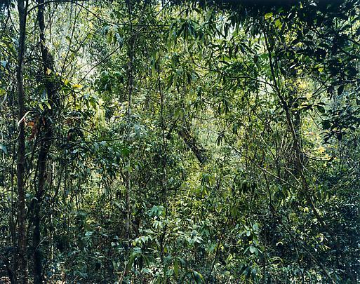 <b>Paradise 9 (Xi Shuang Banna) Provinz Yunnan, China</b>, 1999 Image