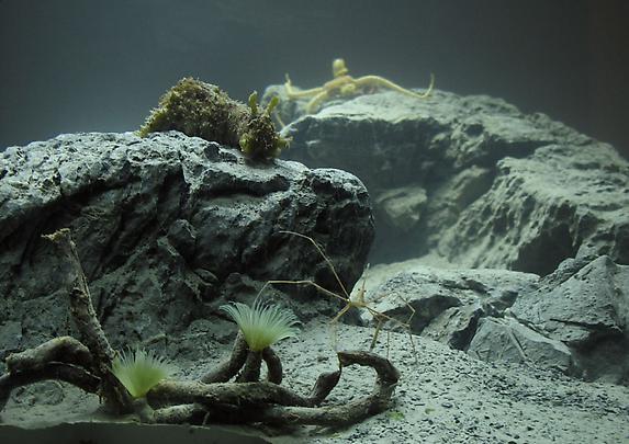 <b>Aquarium</b>, 2010 Image