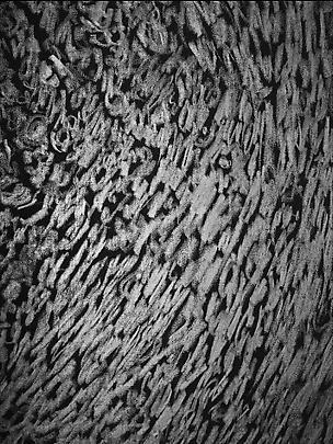 <b>Pelle di grafite - Riflesso di Vanadite</b> (Detail), 2007 Image