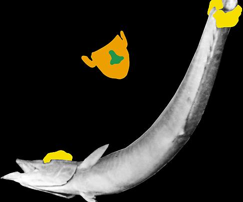 <b>Noses & Ears, Etc. (Part Two): (Orange) Face with (Green) Nose and (Yellow) Hands and Fish</b>, 2006 Image
