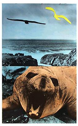 <b>Walrus (With Open Mouth) And Two Observers</b>, 1991 Image