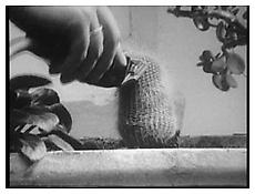 Ger van Elk, <i>The Well-Shaven Cactus</i> still, 1970, 16 mm film on DVD, b/w, sound, 1 min. 30 sec. (loop)