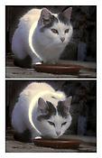 <i>Busi (Kitty)</i> 2001 DVD 6:30 minutes 5 x 5 1/2 x 1/2 inches; 13 x 14 x 1 cm