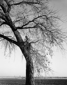 <I>East of Longmont, Colorado</i>  1984 Gelatin silver print  20 x 16 inches; 51 x 41 cm