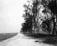 <I>Abandoned windbreaks, west of Fontana, California</i>  1983 Gelatin silver print 8 1/2 x 10 1/2 inches; 22 x 27 cm