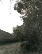 <I>Next to Interstate 10, Redlands, California</i> 1983 Gelatin silver print Image: 18 3/4 x 15 inches; 48 x 38 cm Sheet: 20 x 16 inches; 41 x 51 cm