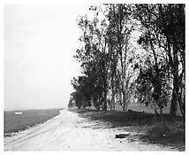 <i>Abandoned windbreaks, west of Fontana, California</i> 1983 Gelatin-silver print 11 x 14 inches; 28 x 36 cm