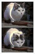 Peter Fischli David Weiss <i>Busi (Kitty)</i> 2001 6:30 minutes, DVD
