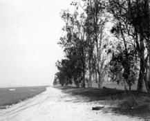 <I>Abandoned windbreaks, west of Fontana, California</i> 1983 Gelatin silver print Image: 12 1/2 x 15 1/4 inches; 32 x 39 cm Sheet: 16 x 20 inches; 41 x 51 cm