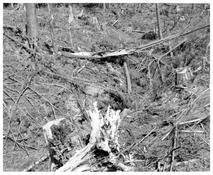 Robert Adams <I>On Humbug Mountain, Clatsop County, Oregon</i> 1999-2003 Gelatin silver print 11 x 14 inches; 28 x 36 cm