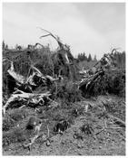 Robert Adams <I>Clatsop County, Oregon</i> 1999-2003 Gelatin silver print 20 x 16 inches; 51 x 41 cm