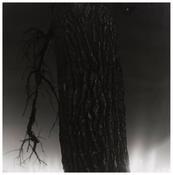 Robert Adams <I>Untitled</i> c. 1981 Gelatin silver print 15 x 15 inches; 38 x 38 cm