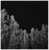 Robert Adams <I>Untitled</i> 1978 Gelatin silver print 6 1/2 x 6 inches; 17 x 15 cm