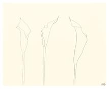 <I>Calla Lily</i> 2007 Graphite on paper 19 1/2 x 24 3/8 inches; 50 x 62 cm