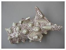 Chris Garofalo, <i>Stichopus Horrens</i>, 2010, Glazed porcelain, 8 x 4 x 3 inches; 20 x 10 x 8 cm
