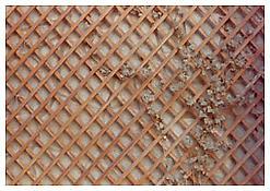 Luigi Ghirri, <i>Modena</i>, 1972-74, C-print, 4 3/8 x 6 1/4 inches; 11 x 16 cm