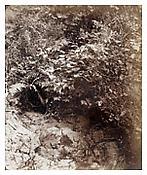 August Kotzsch, <i>Am Thiergarten, Blätter mit Bach (At Thiergarten, Leaves with Stream)</i>, ca. 1865, Albumen print, 7 1/2 x 6 1/4 inches; 19 x 16 cm