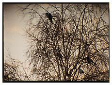 Tacita Dean, <i>Pie</i> still, 2003, 16 mm film, color, sound, 7 min.