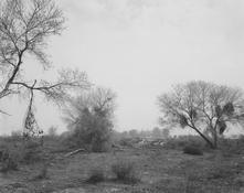 <I>Santa Ana Wash, San Bernardino County, California</i> 1982 Vintage gelatin silver print Image: 14 7/8 x 18 5/8 inches; 38 x 47 cm Sheet: 15 7/8 x 19 7/8 inches; 40 x 51 cm