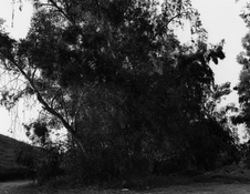 <I>Near Interstate 10, East Edge of Redlands, California</i>  1982 Gelatin silver print 14 7/8 x 18 5/8 inches; 38 x 47 cm